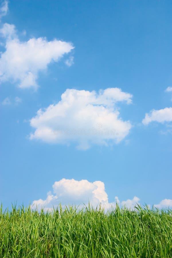 Erba verde e bello cielo nuvoloso blu. fotografia stock libera da diritti