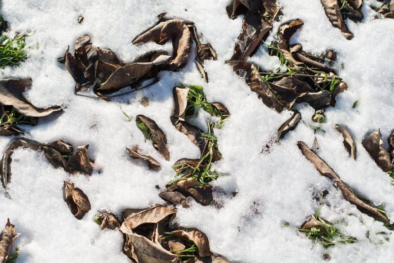 Erba verde e foglie asciutte in neve e ghiaccio fotografia stock