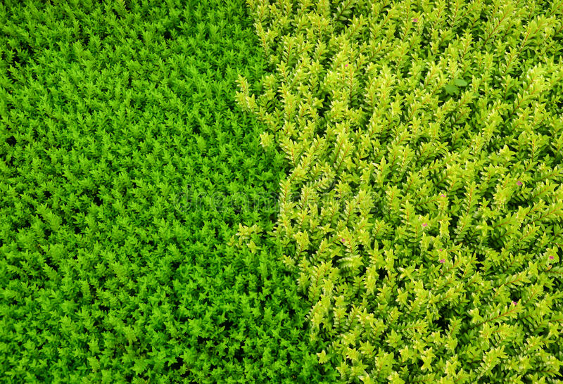 Erba verde e gialla di colore differente fotografie stock libere da diritti