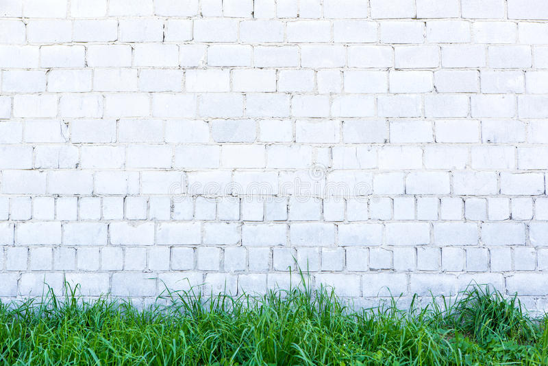 Erba verde e parete bianca fotografia stock libera da diritti