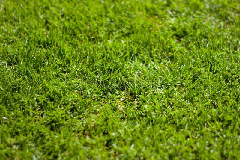 Erba verde fertile immagini stock