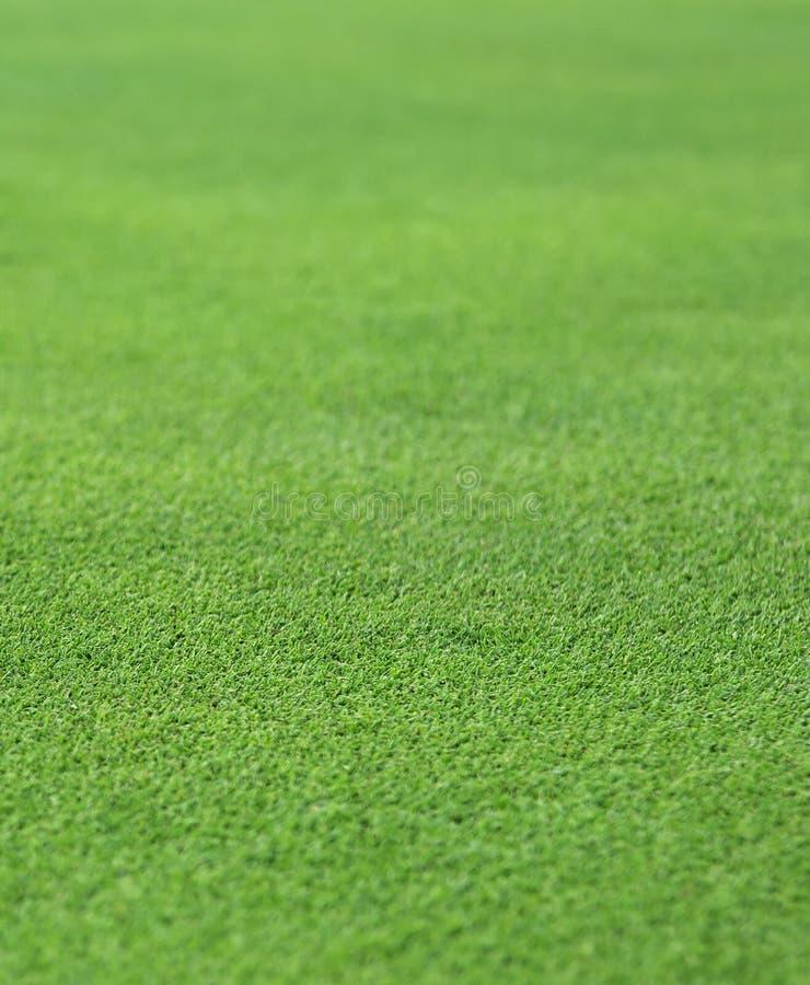 Erba verde fine fotografie stock libere da diritti