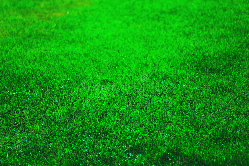 Erba verde fresca immagini stock