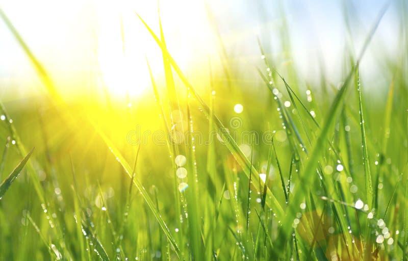 Erba verde fresca della molla con le gocce di rugiada fotografia stock libera da diritti