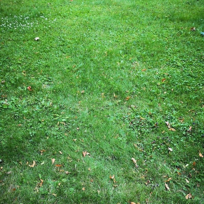 Erba verde fresca luminosa sul prato inglese nel parco immagini stock libere da diritti