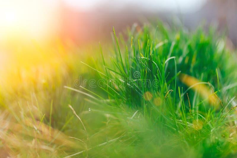 Erba verde intenso Erba fresca della molla con luce solare Sun Fuoco molle Natura astratta Fuoco selezionato fotografia stock