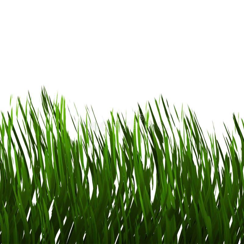 Erba verde isolata illustrazione vettoriale