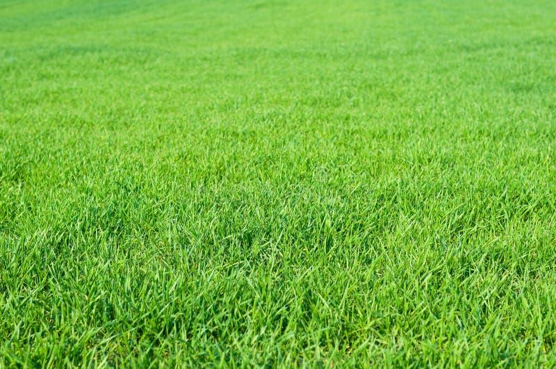 Erba verde in primavera come sfondo naturale immagine stock libera da diritti