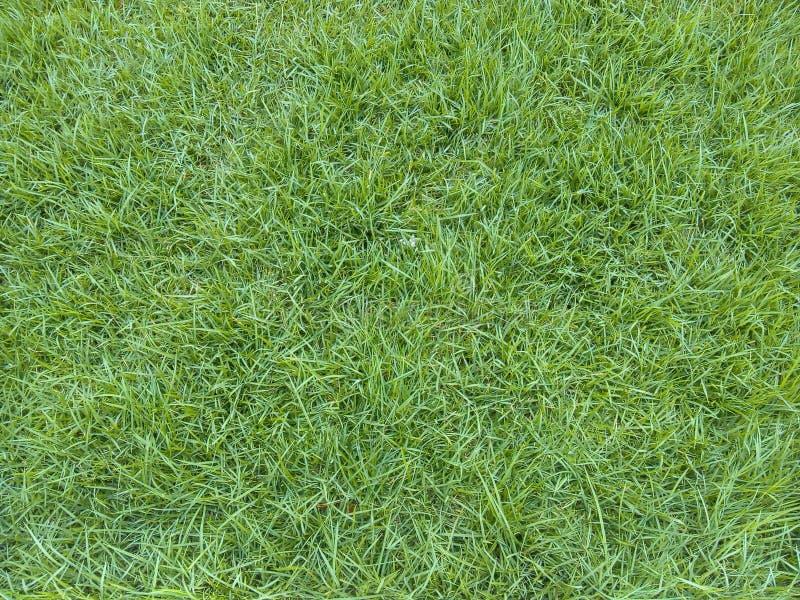 erba verde smeraldo fotografia stock libera da diritti