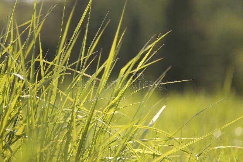 Erba verde in sole immagini stock