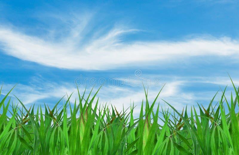 Erba verde sopra un fondo del cielo blu fotografie stock libere da diritti