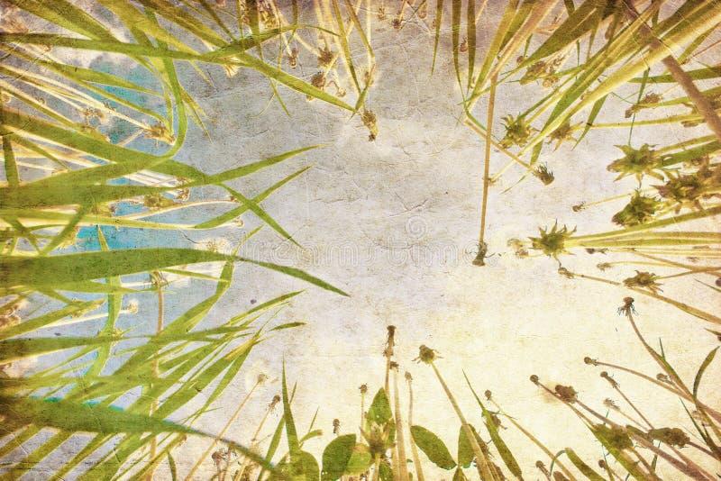 Erba verde sotto cielo blu nello stile del grunge immagine stock