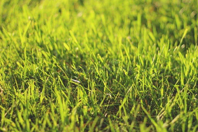 Erba verde sparata nel bokeh di tramonto fotografia stock libera da diritti