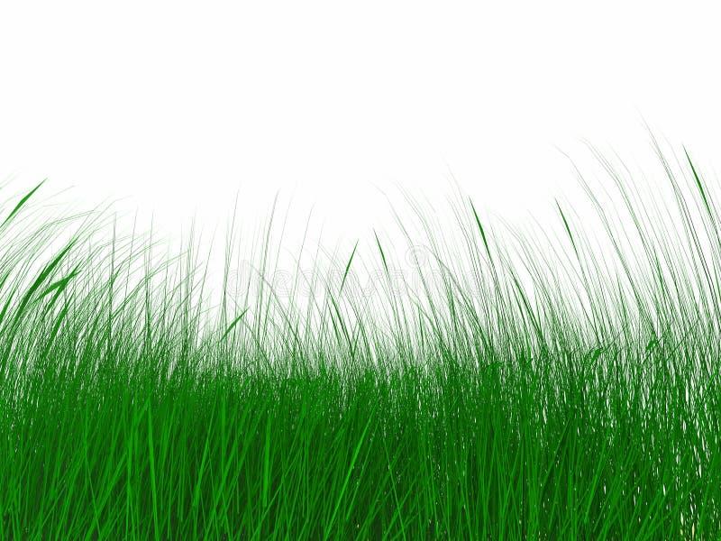 Erba verde sugosa fotografia stock libera da diritti
