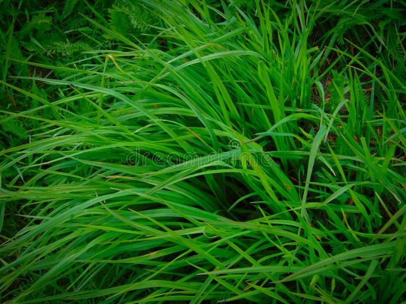 Erba verde sul campo di estate fotografia stock