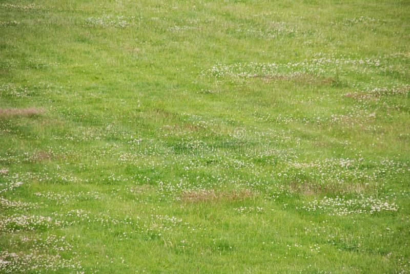 Erba verde sulla fine del prato inglese su, fondo immagini stock