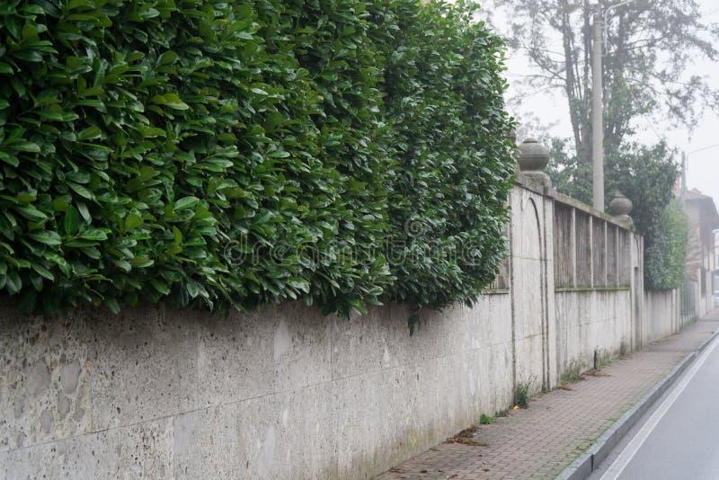Erba verde sulla parete di pietra nei precedenti della via per il sito Web o i dispositivi mobili fotografia stock