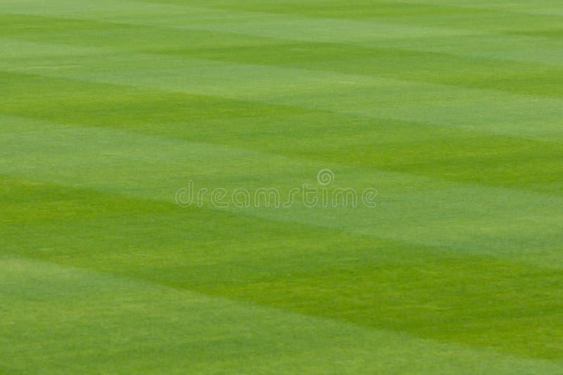Erba verde in uno stadio o in un campo di sport fotografia stock libera da diritti
