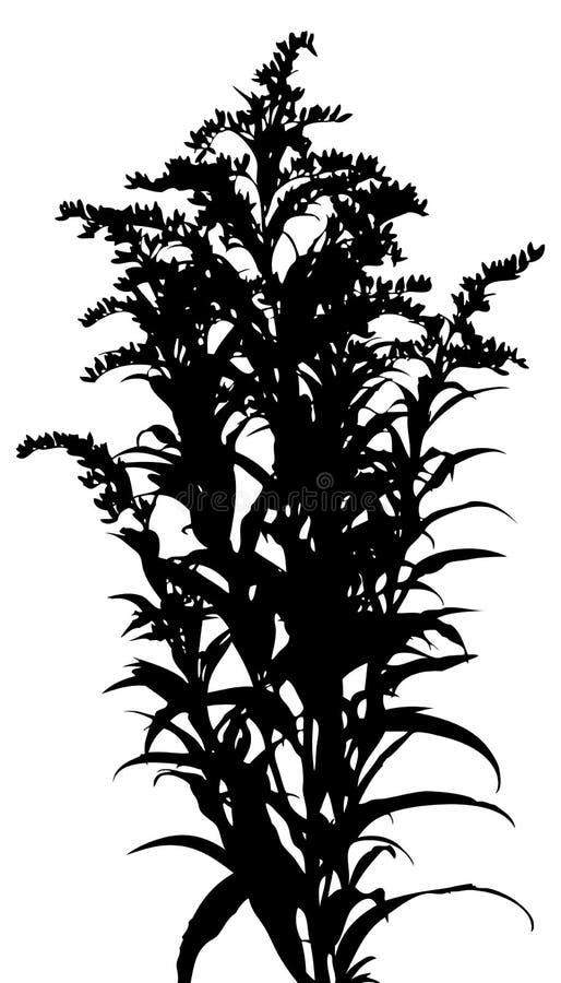 Erba, vettore della pianta royalty illustrazione gratis