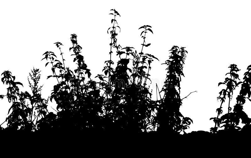 Erba, vettore della pianta illustrazione vettoriale