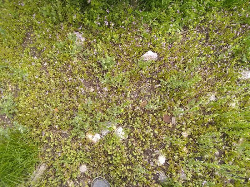 Erbacce e sporcizia dell'erba immagini stock libere da diritti