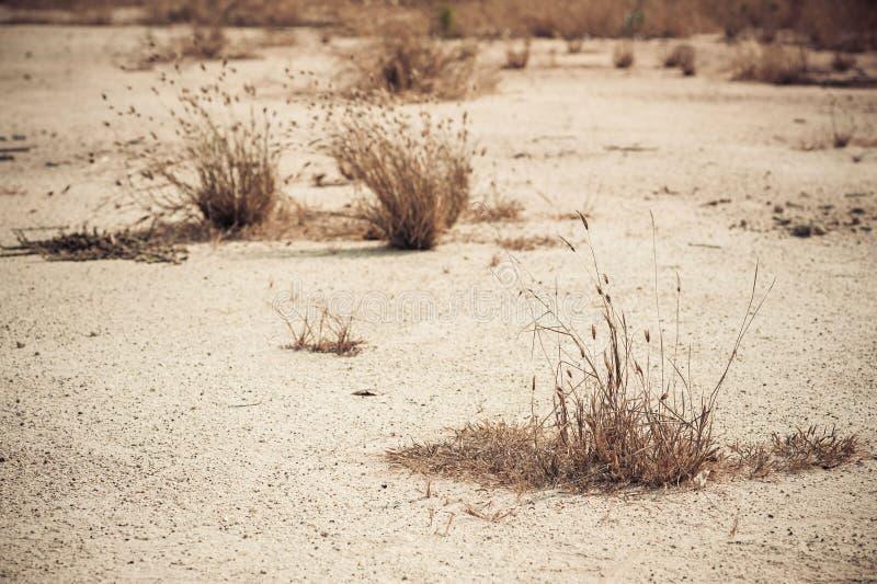 Erbaccia asciutta su terra asciutta fotografie stock libere da diritti