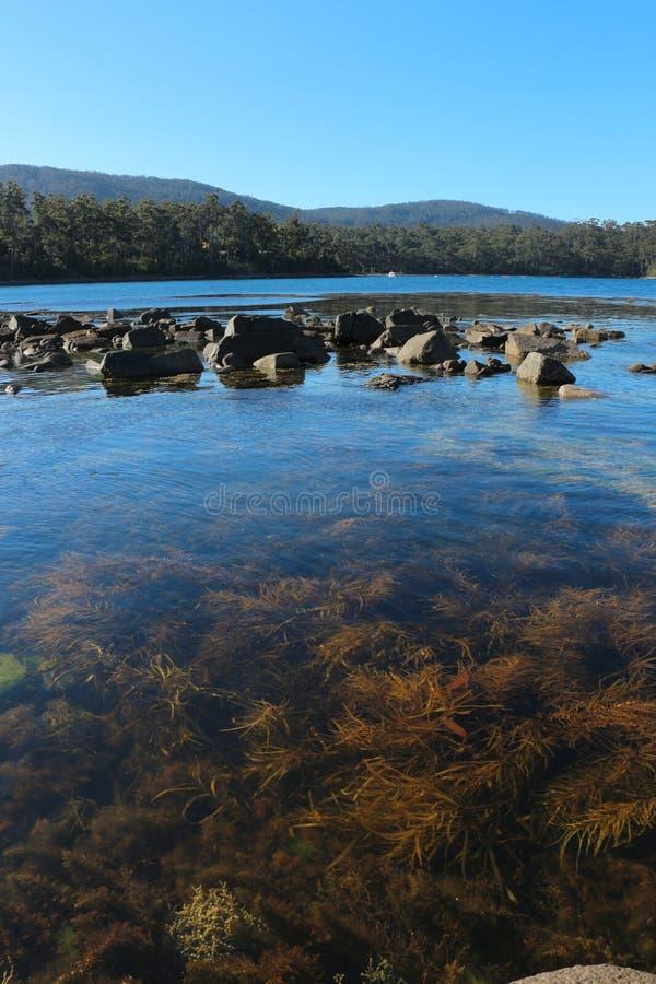 Erbaccia tasmaniana del mare, vicino al Port Arthur fotografia stock libera da diritti