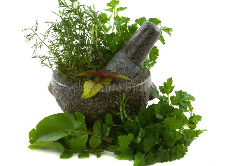 Download Erbe fotografia stock. Immagine di aroma, aromatherapy - 3876384