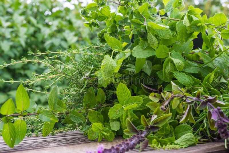 Erbe del giardino, piante medicinali immagine stock libera da diritti