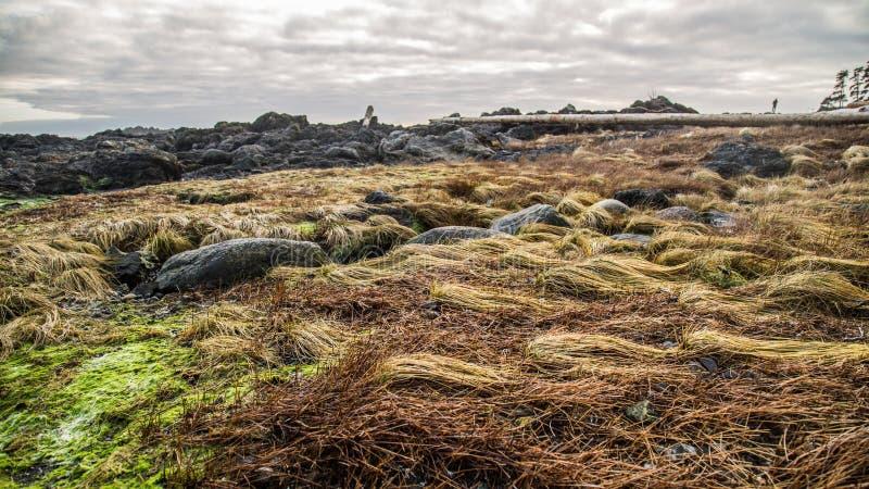 Erbe del mare dell'isola di Vancouver fotografia stock