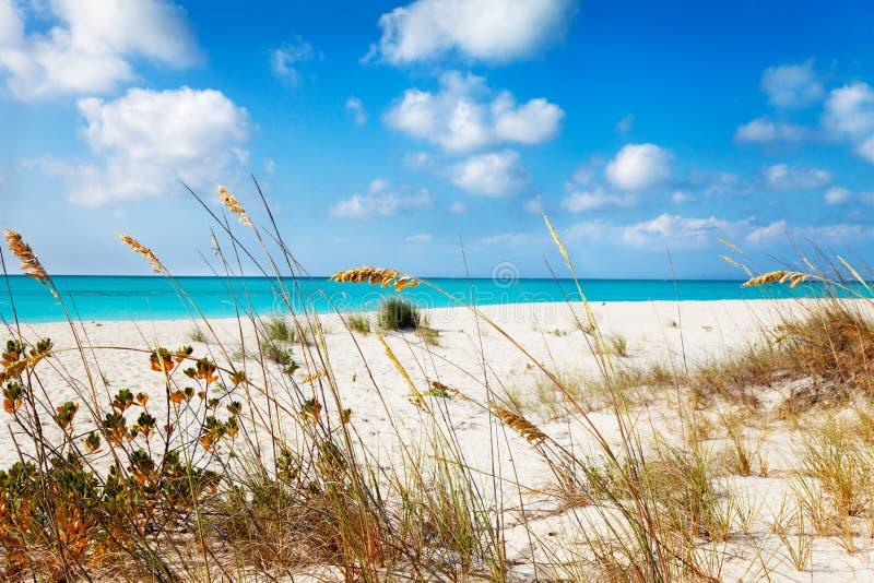 Erbe della duna dietro Half Moon Bay fotografia stock