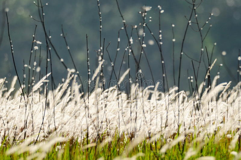 Erbe di fioritura immagine stock