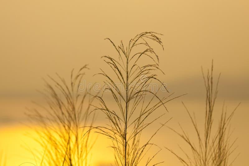 Erbe di tramonto immagini stock
