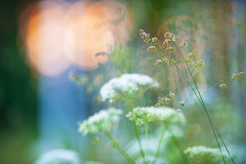 Erbe e fiori nel prato fotografia stock