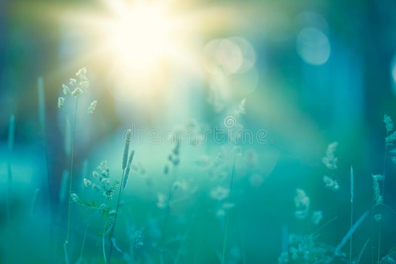 Erbe e fiori nel prato fotografia stock libera da diritti