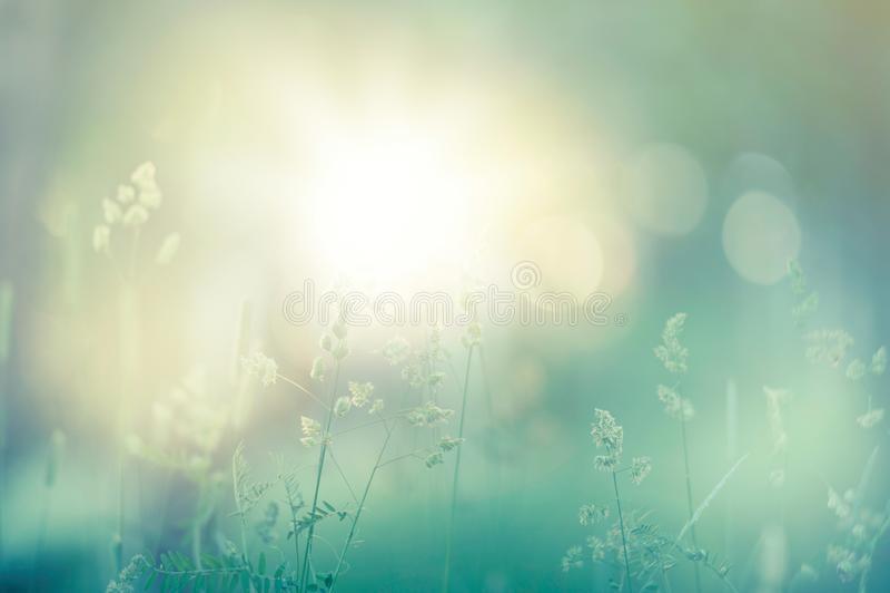 Erbe e fiori nel prato immagine stock