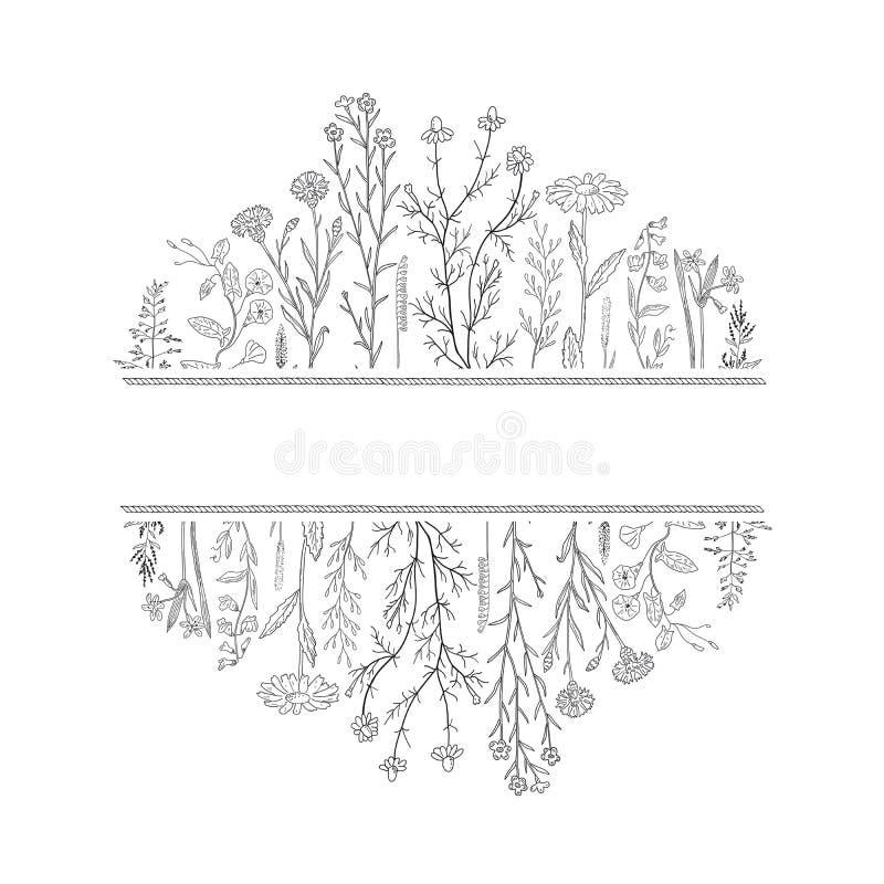 Erbe e fondo e posto disegnati a mano dei fiori per testo illustrazione vettoriale