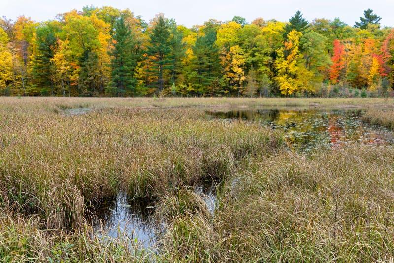 Erbe e palude del nativo Lakeshore in autunno immagini stock libere da diritti