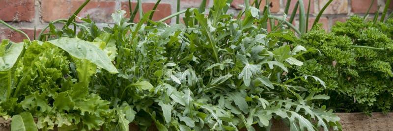 Erbe e verdure fresche nell'orto domestico immagine stock libera da diritti