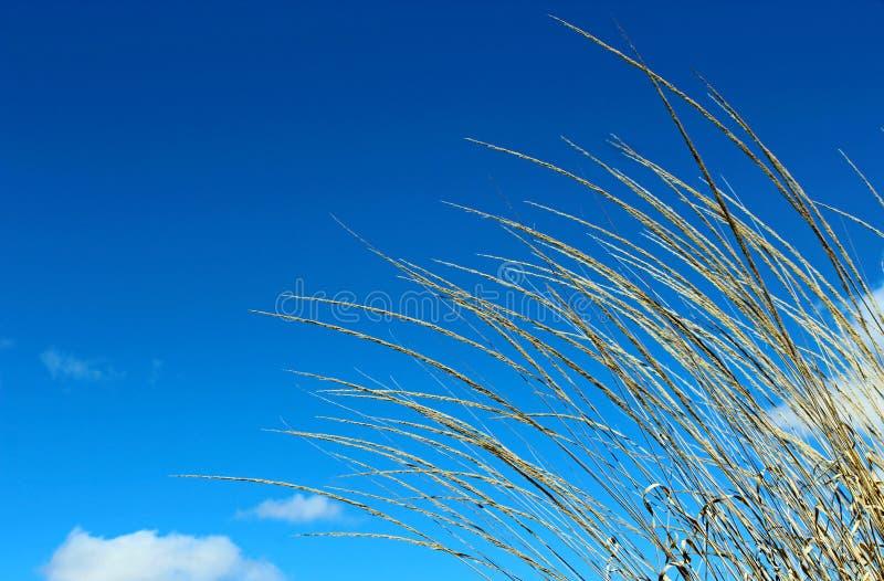 Erbe ed il cielo blu fotografie stock libere da diritti