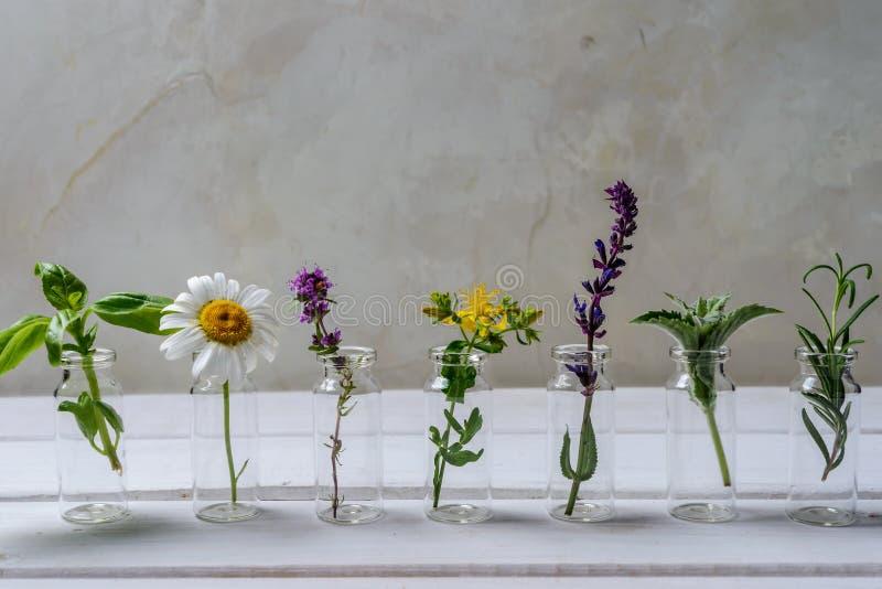 erbe fresche per medicina alternativa e l'aromaterapia fotografia stock libera da diritti