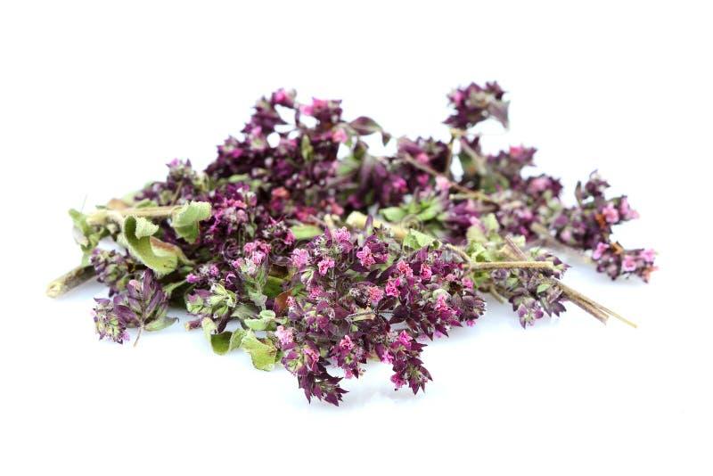 Erbe naturali in una serra I fiori secchi del timo fotografia stock