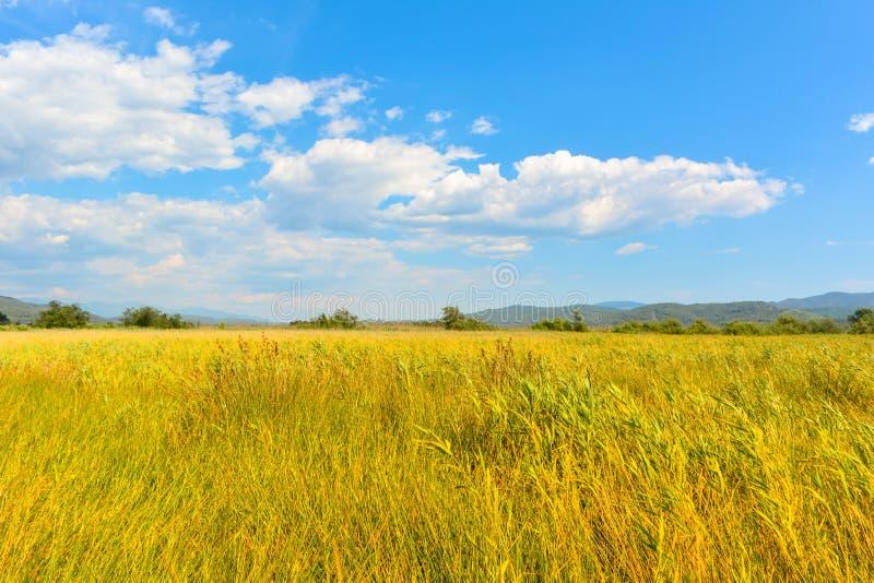 Erbe, nuvole e cielo gialli fotografie stock libere da diritti