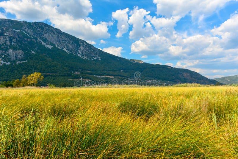 Erbe, nuvole e montagna gialle fotografie stock libere da diritti