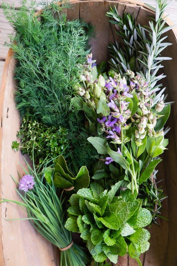 Erbe selezionate fresche dall'orto domestico: erba cipollina, menta, timo, ROS fotografia stock libera da diritti