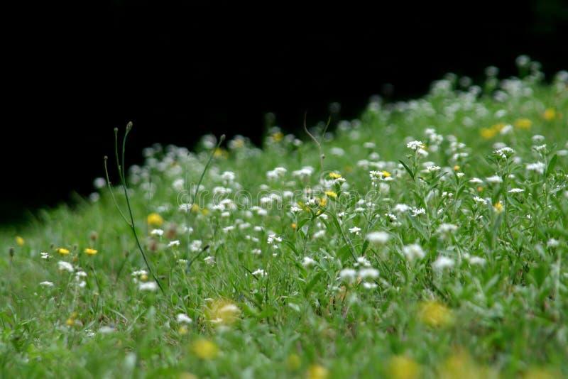 Erbe selvatiche e vento di estate immagine stock