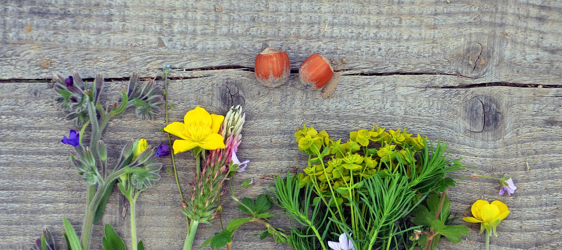 erbe su un fondo di legno immagine stock