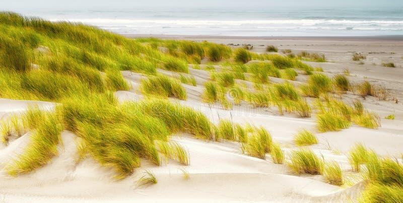Erbe sulla spiaggia, Bandon Oregon fotografia stock