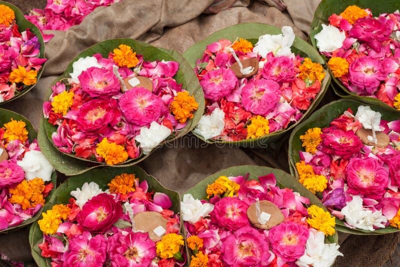 Erbjuda för blomma royaltyfri bild