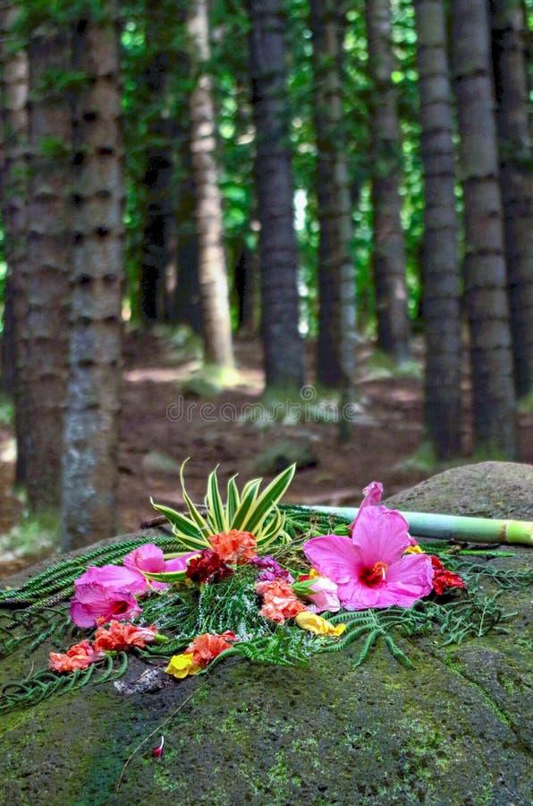 Erbjuda på att sova jätten, Nounou Forest Reserve, Kauai, Hawaii, USA royaltyfri foto